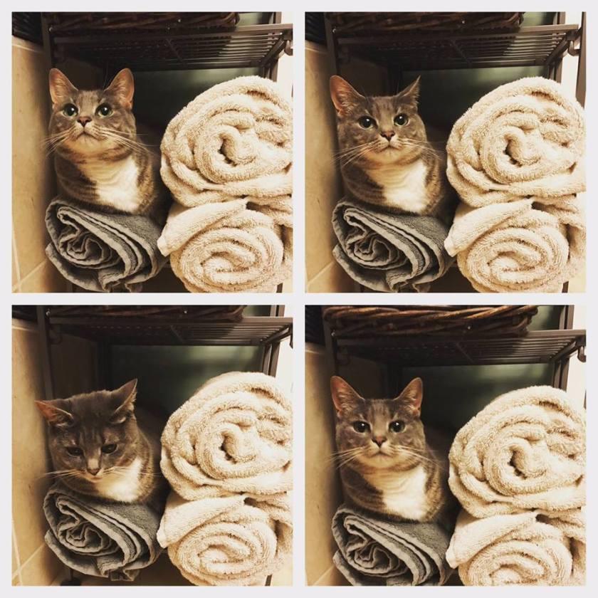david-ludwig-cats