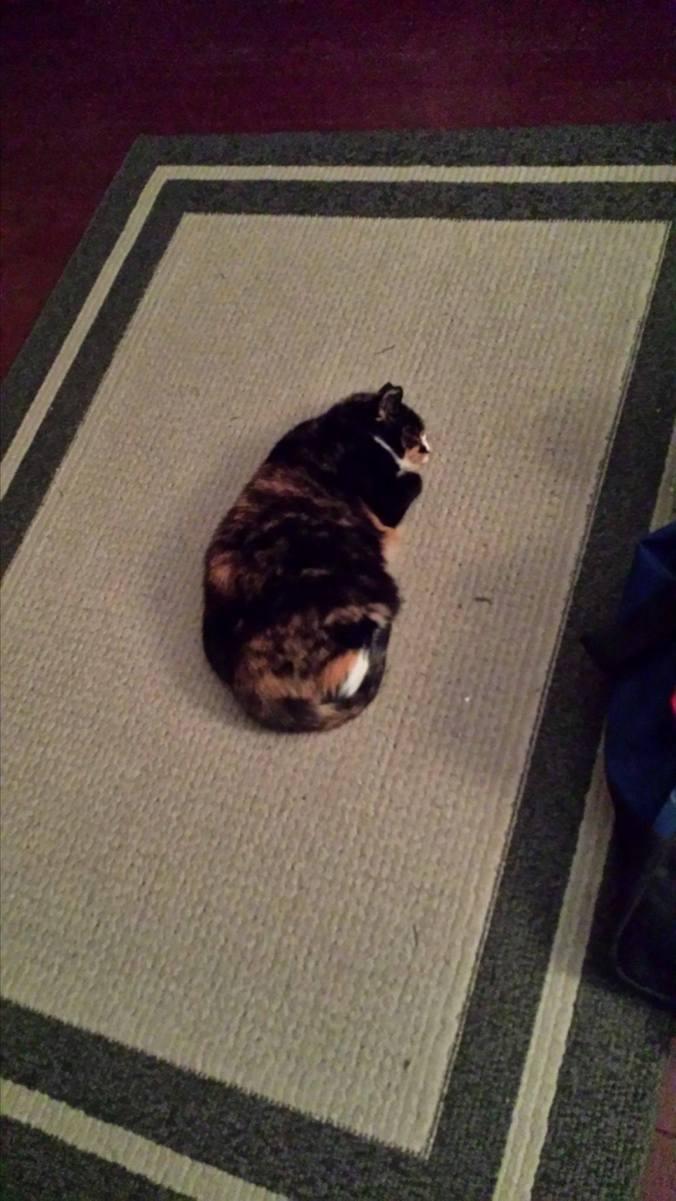 my-lindsay-cat